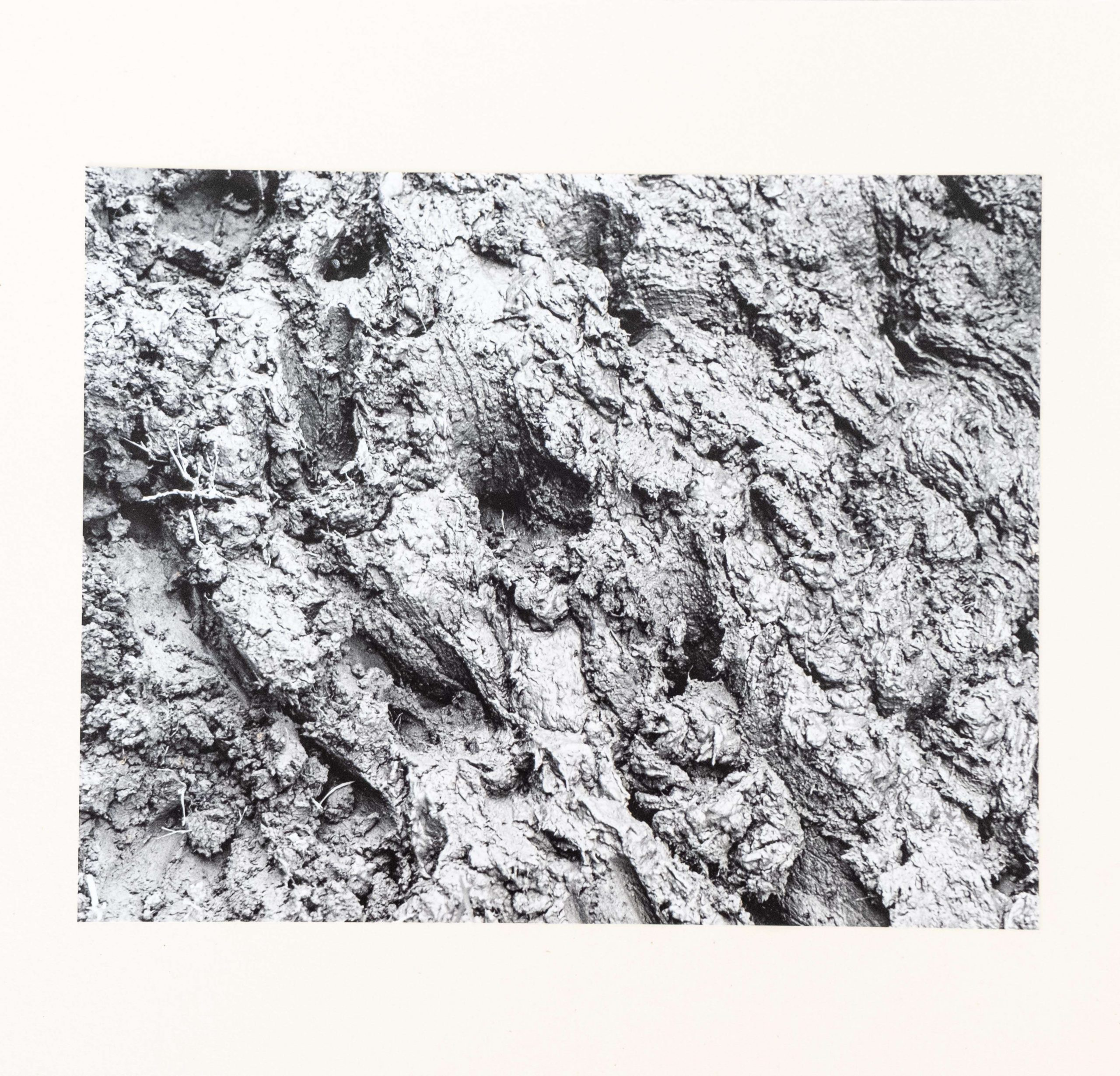 Silentes Loquimur fango